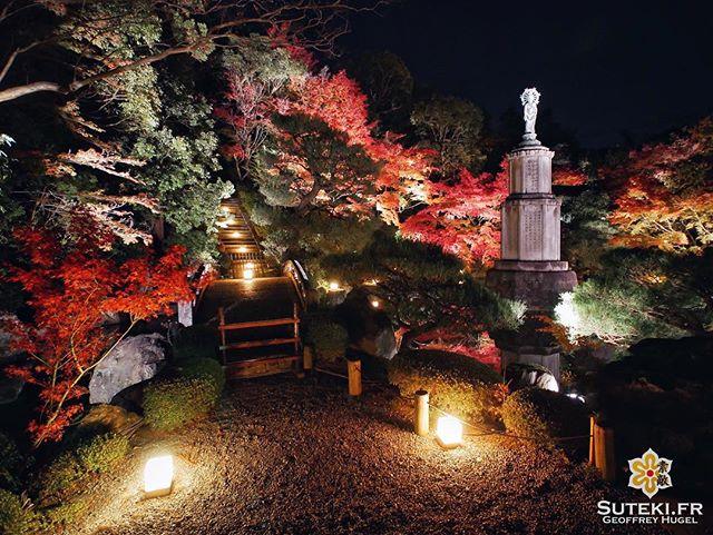 L'arrivée des momiji signe aussi le retour des light up ! #japon #kyoto