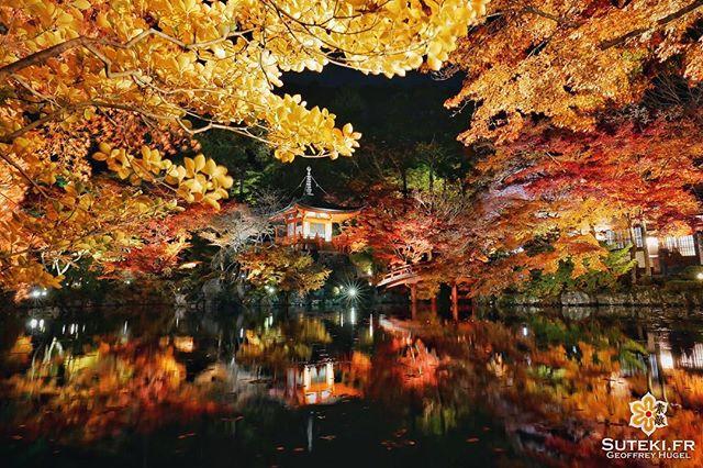 Kyoto et les momiji, c'est imbattable ! #japon #kyoto #kyotosafari