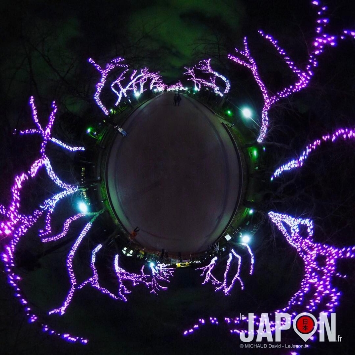 Les Sakura de lumière à Ueno 