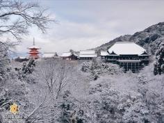 Un dernier tableau majestueux… #japon #kyoto