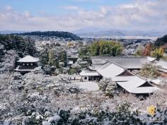 Une dernière photo sous la neige pour la route #japon #kyoto
