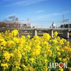Désolé de ne pas avoir posté de photos du Japon depuis un moment… Je profite du printemps 😘☀️🌼🌼🌼