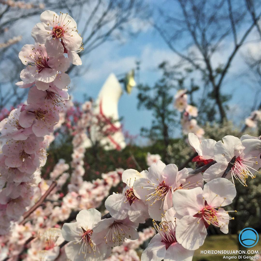 Une belle journée de printemps avec les Ume en fleur sous la Tour du Soleil d'Osaka #iPhone #japonsafari #osakasafari