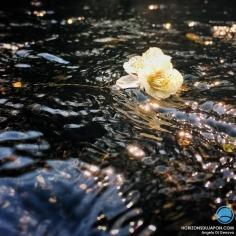 Avant de dire bonjour aux Sakura, il va falloir dire au revoir aux Ume, qui traversent doucement la rivière Sanzu. 『三途の川を渡る梅の花』