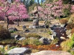 Les pruniers aussi savent en mettre plein la vue #japon #kyoto #kyotosafari