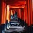 Le Resplendissant #japon #kyoto #kyotosafari