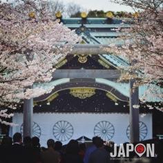 Il neige des pétales de cerisiers, ce qui annonce la fin des Sakura 🌸🌸🌸 #Sakura #Tokyo
