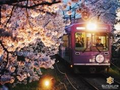 Les sakura se contemplent aussi du train #japon #kyoto