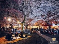 Le hanami est plus qu'une histoire de fleurs, c'est une atmosphère unique #japon #kyoto