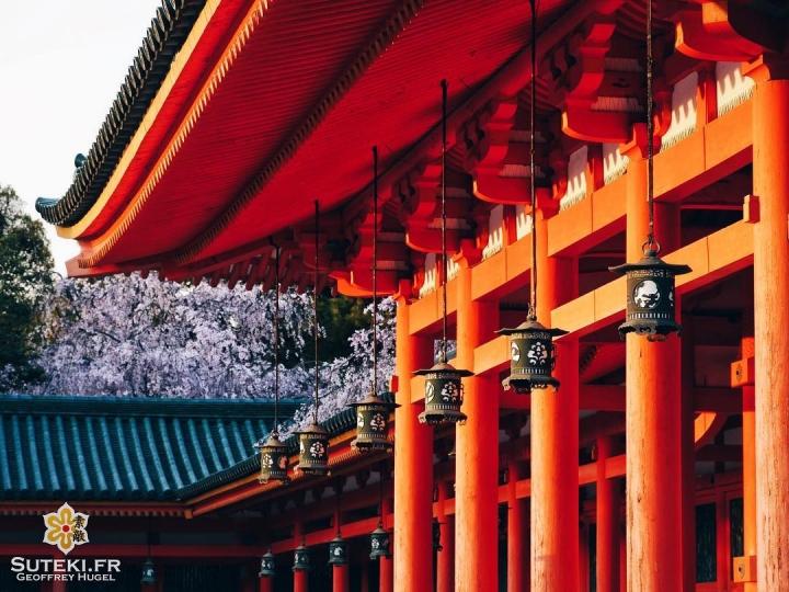 Du classique ! Des lanternes et des cerisiers ! #japon #kyoto #kyotosafari