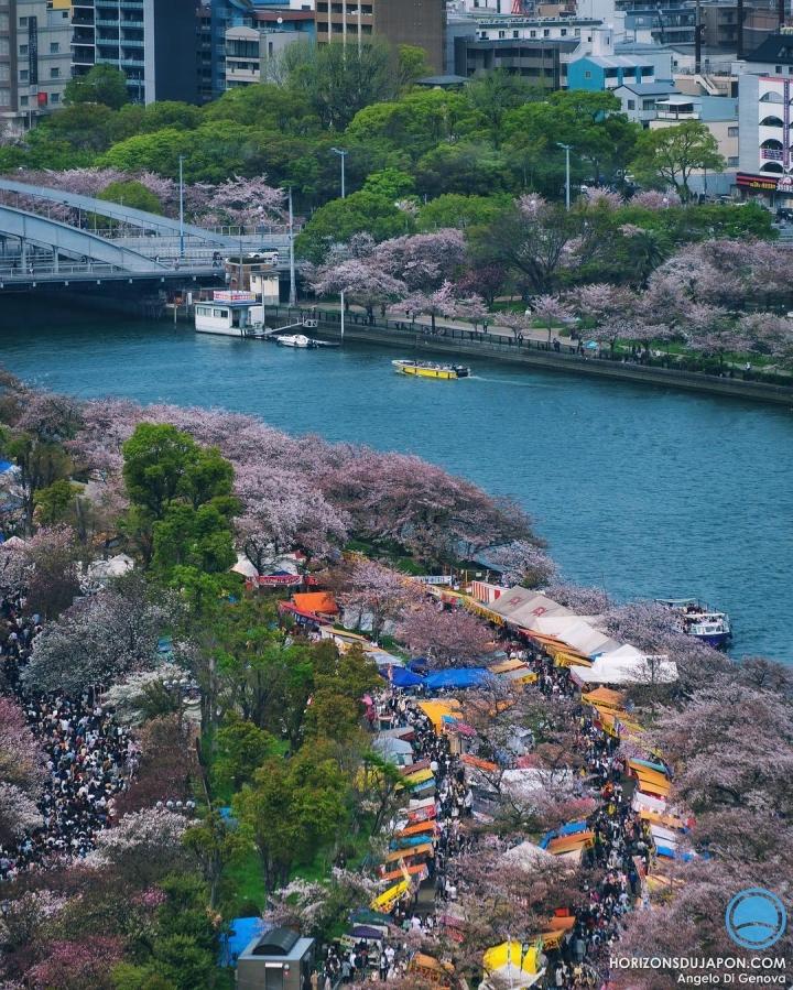 Il y a eu du monde pour aller voir les cerisiers tardifs
