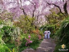 Tengoku #japon #kyoto #kyotosafari