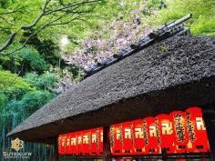 La subtile touche printanière #japon #kyoto #kyotosafari