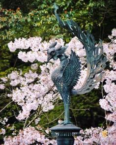 Le plus beau phénix de Kyoto ? #japon #kyoto #kyotosafari