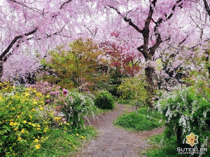 Le plein de couleurs #japon #kyoto #kyotosafari