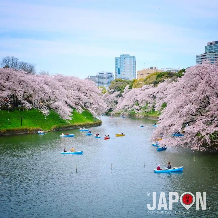 Plein de photos en stock de Sakura ! #sakura #tokyo