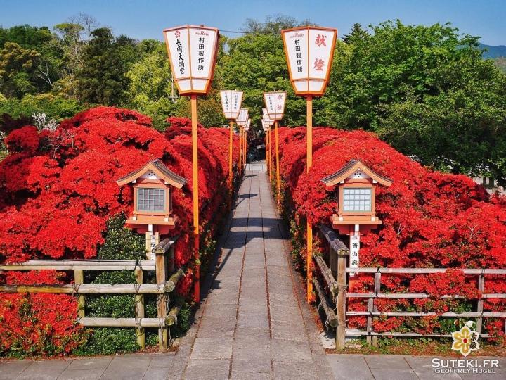 Finis les cerisiers, on passe à autre chose ! #japon #kyoto #kyotosafari