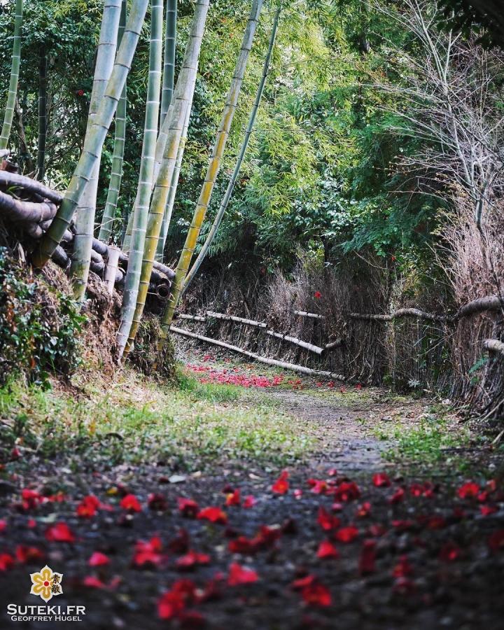 Quand la couleur s'invite parmi les bambous #japon #kyoto