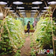 Tokyo est mon jardin ! Je commence avec l'entreprise PASONA pour une petite série bien verte cette semaine. Enjoy ! 😉 #tokyosafari