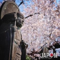 Yanaka fut pendant des années mon jardin secret tokyoïte… Maintenant il est dans tous les guides… mais reste un des quartiers les plus vert de la mégalopole 🌱🐱