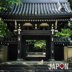 Tokyo est mon jardin ! Ikebukuro ce n'est pas que les manga et des bars… C'est aussi des petits quartiers de temples, des chats et de la nature 😀🌱🐱⛩