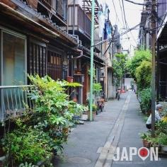 Tokyo est mon jardin ! Les «jardins devant la maison» de Tsukishima. Quartier que j'affectionnais pour les #TokyoSafari et qui disparaît sous les chenilles des pelleteuses en ce moment pour des JO de Tokyo 2020 «propres» sans vieux quartiers 😭