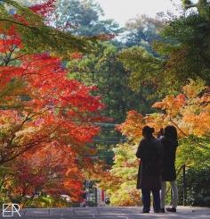 Peins-moi l'automne – Cette saison est particulièrement belle au Japon et douce au niveau des températures. Sans doute un des meilleurs moments pour venir visiter le pays du soleil levant ! :)