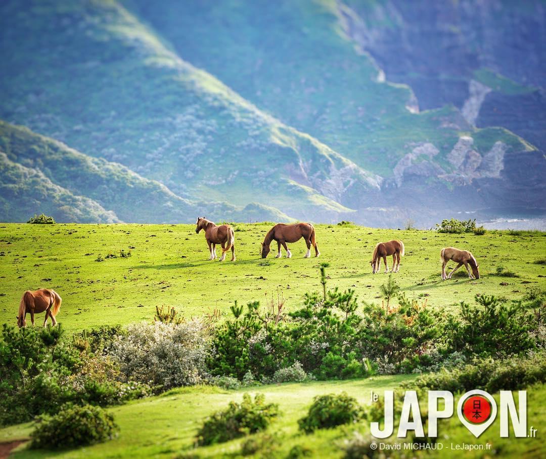 Les chevaux sauvages de Nishinoshima ! 🐴🐴🐴😍 #SaninAdventure #Nishinoshima