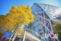L'automne est là avec quasiment 1 mois d'avance à Tokyo 😱😗