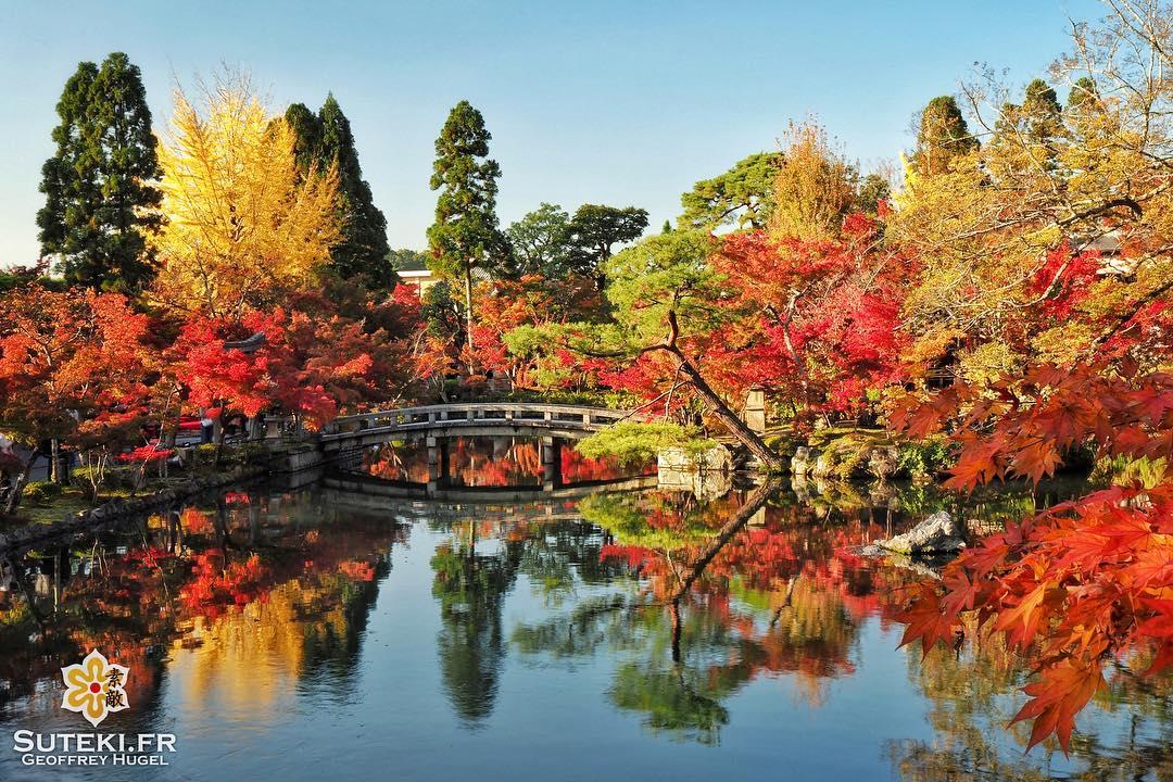 Le jardin qui ne déçoit jamais #japon #kyoto #kyotosafari
