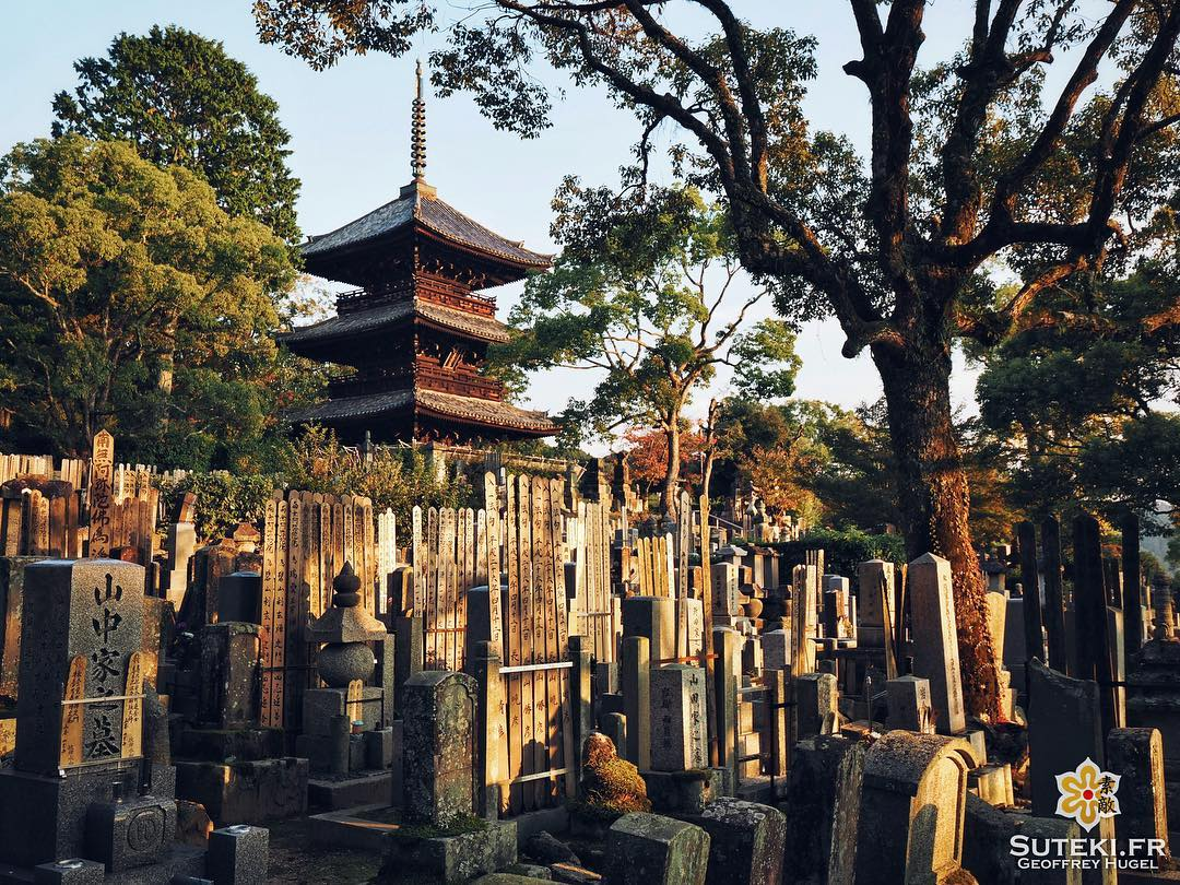 Quiétude #japon #kyoto #kyotosafari