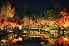 Qui dit momiji dit light up ! #japon #kyoto