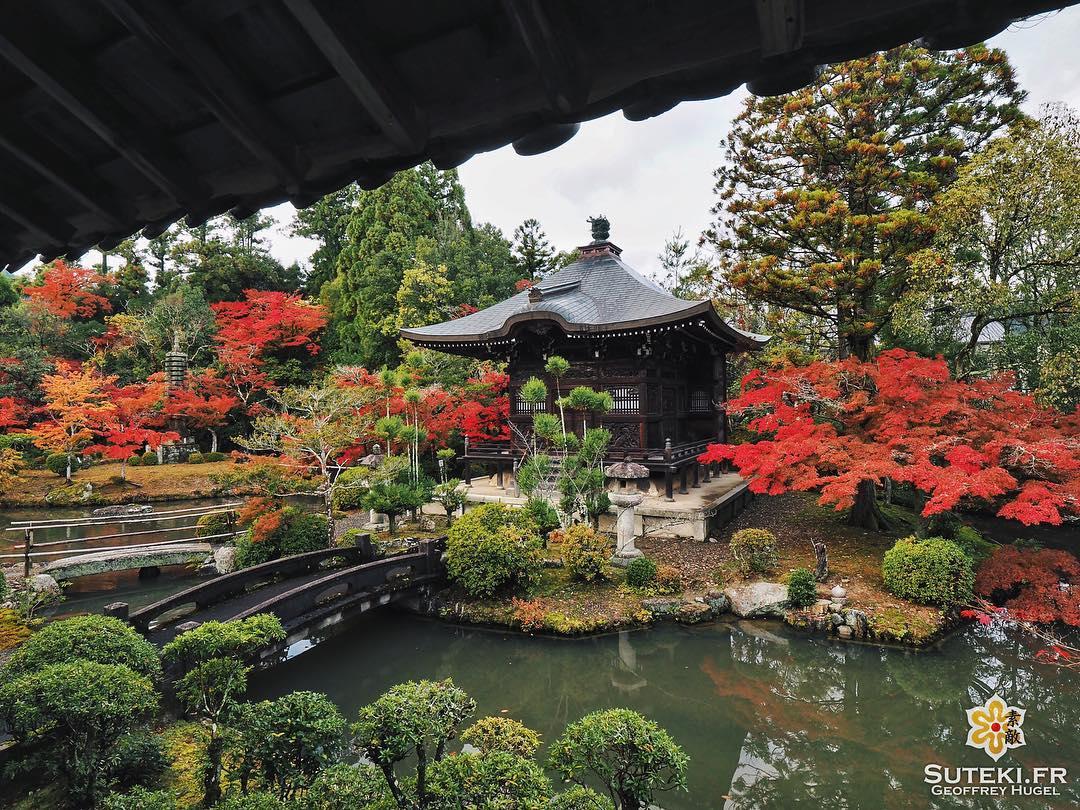L'automne, où quand le moindre spot se sublime ! #japon #kyoto