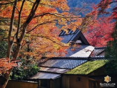 Les petits spots sympas ! #japon #kyoto #kyotosafari