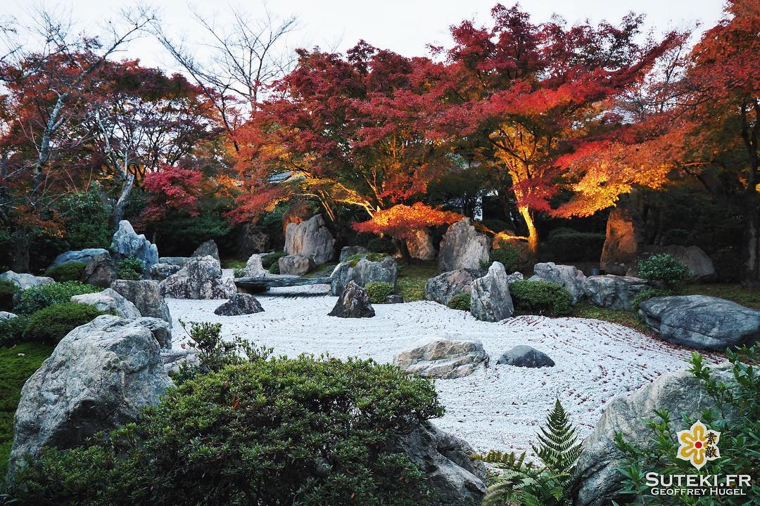 Quand l'illumination commence avant la tombée de la nuit #japon #kyoto #kyotosafari
