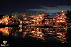 Phénix nocturne #japon #kyoto