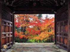 Portes ouvertes sur les momiji ! #japon #kyoto