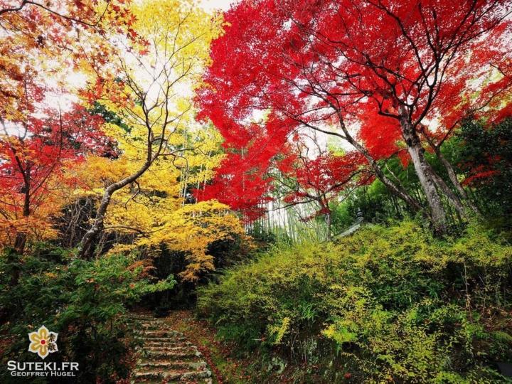 Le chemin qui mène aux couleurs #japon #kyoto