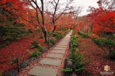 Lit écarlate #japon #kyoto #kyotosafari