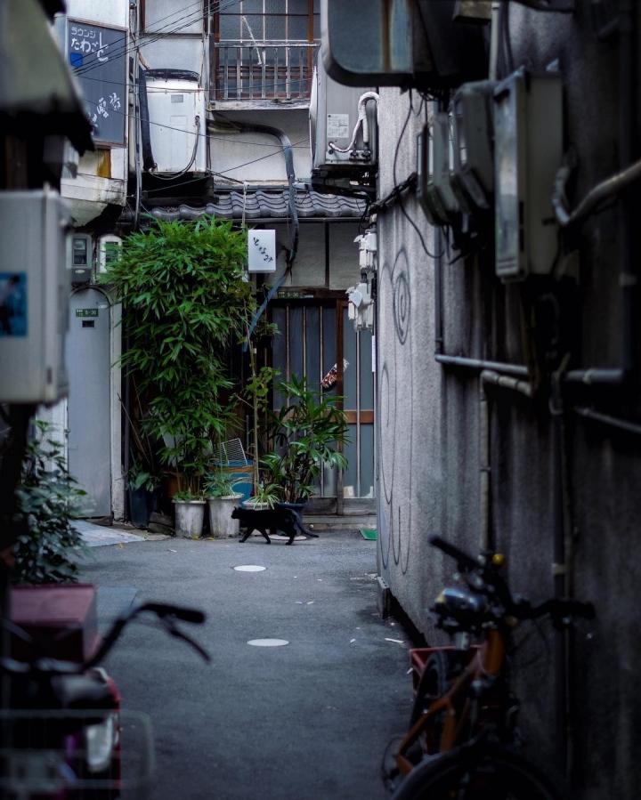 Interstice urbaine II #osakasafari #japonsafari