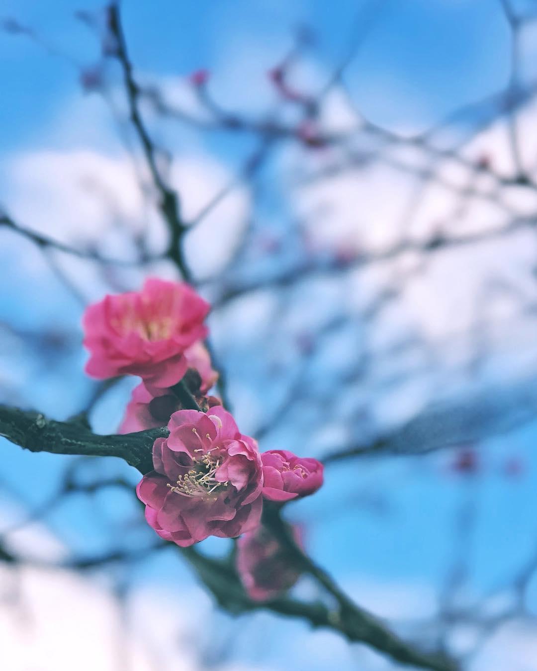 Prémisses du printemps à venir