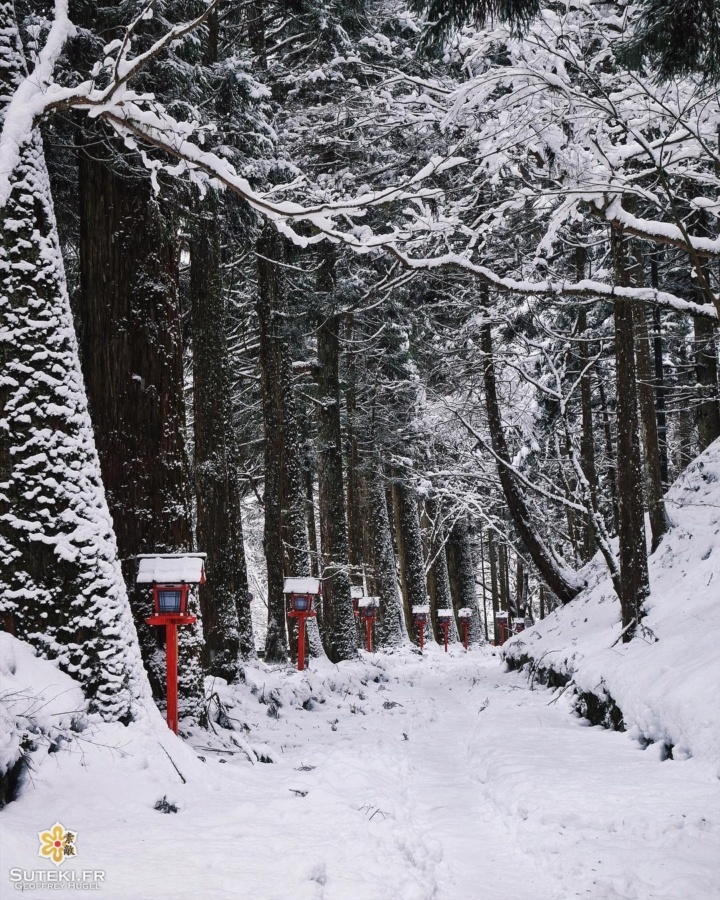 Promenons nous dans les bois pour voir que la neige est là