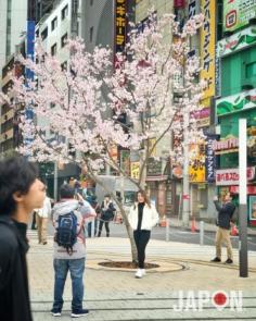 Let's start Sakura ! 🌸🌸🌸😘