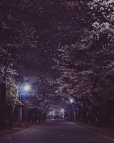 Sakura Nocturne