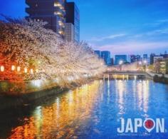Merci dame nature pour les Sakura cette année !😃🌸🌸🌸