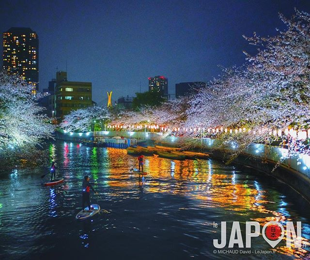 Tokyo Sakura by night & #UltraColor #Sakura #TokyoSafari