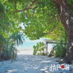 De la jungle à la plage… l'autre Japon à Ishigaki ! 👌🏻🏝🐠 #Ishigaki #Japon