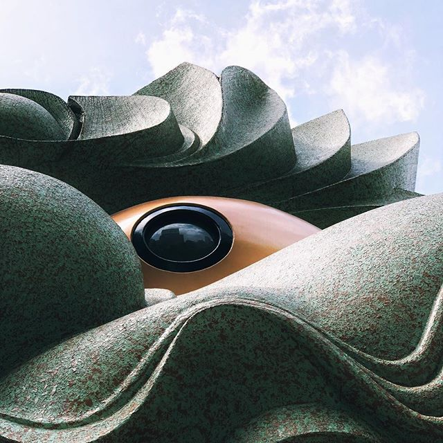 In the eyes of the lion  #osakasafari #japonsafari