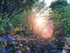 Dans la jungle de Namba #osakasafari #japonsafari 
