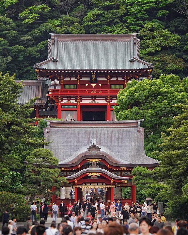 Le mysticisme du Japon passe aussi par ses forêts qui recouvrent plus de la moitié du territoire.
